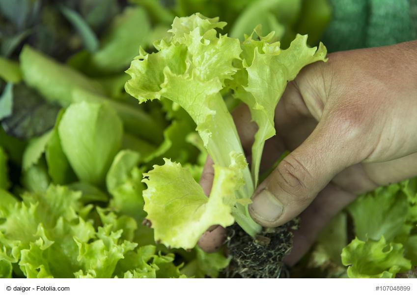 cultivar alimentos orgánicos