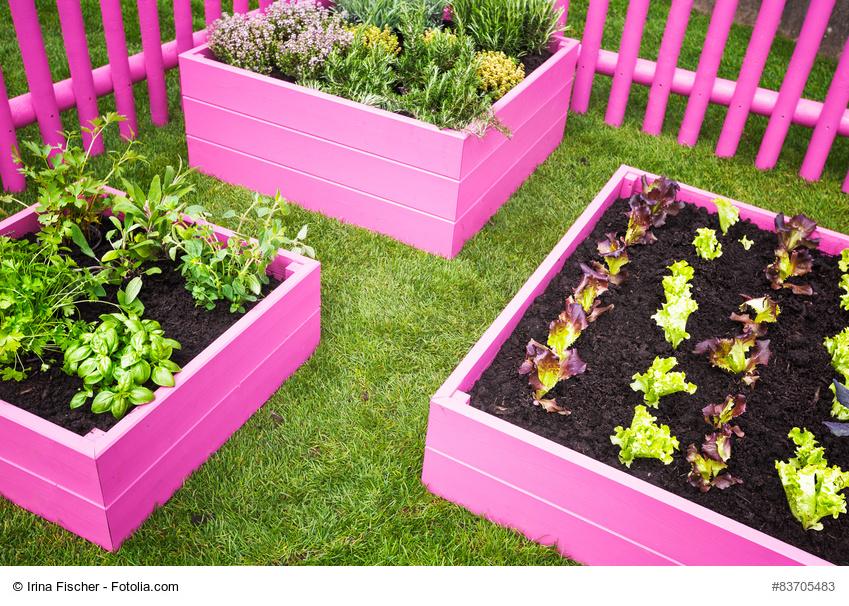 Huertos escolares la nueva tendencia for Que plantas se siembran en un huerto