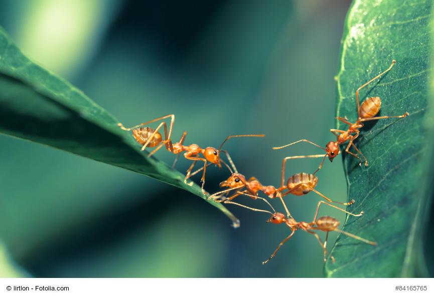 Plagas hormigas