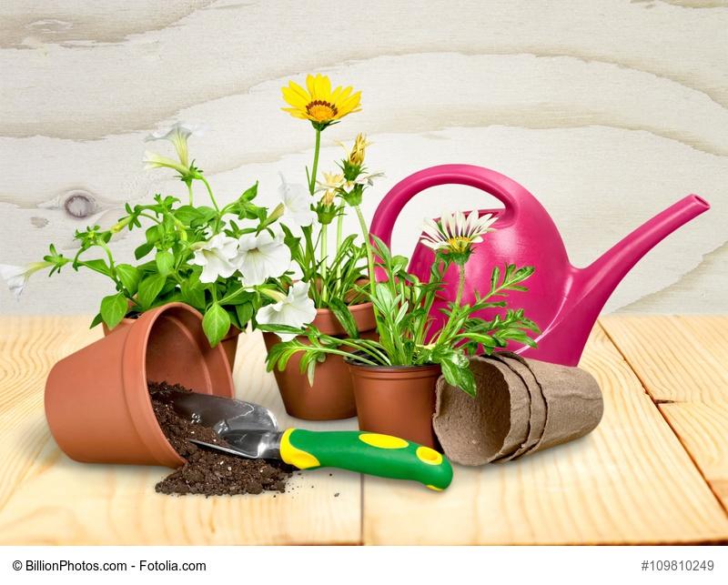 C mo cultivar plantas en macetas for Macetas cultivo interior