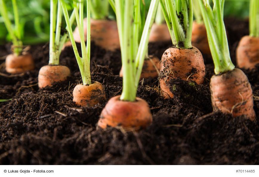verduras fáciles de cultivar: 5 tipos