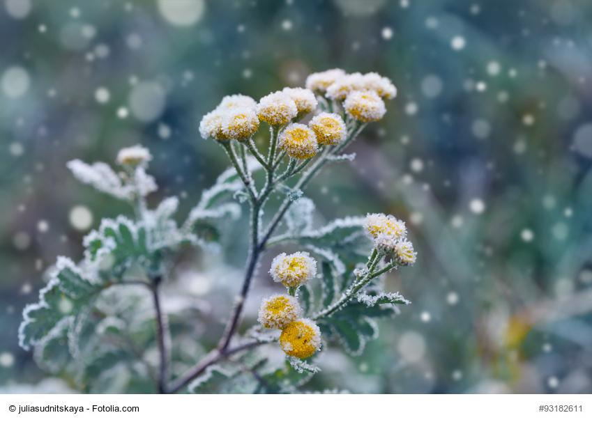 Cómo Cultivar en Invierno: Guía Práctica