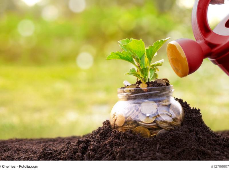 Cómo Ahorrar Agua en Tu Jardín