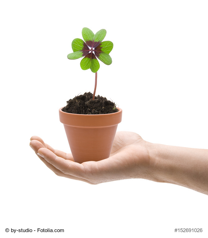 Trucos y consejos para cultivar plantas en macetas for Huerta de aromaticas en macetas