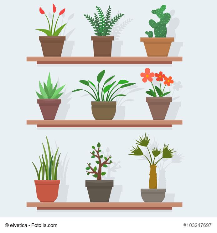 trucos y consejos para cultivar plantas en macetas
