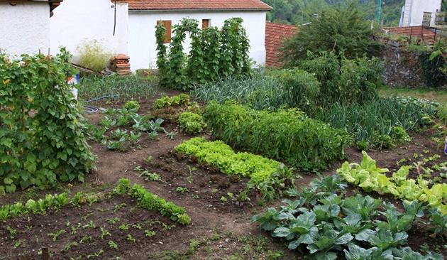Huerto urbano cultivos